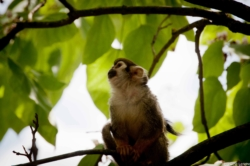 Un singe au parc Paradisio