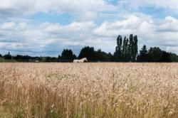 Un cheval dans un champs