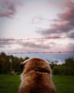 leriche-ludivine-photographie-animaux-51