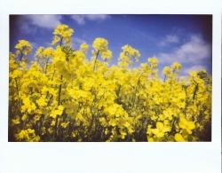 Un polaroid Instax Wide de fleurs jaunes