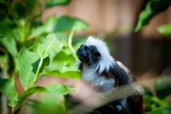 Un singe au zoo