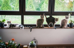 Les chats, Oscar, Billy, Jones et Opie