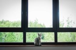 Mon chat Léon