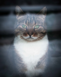 Portrait de mon chat Jones