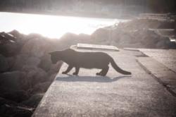 Un chat au bord de la mer à Majorque